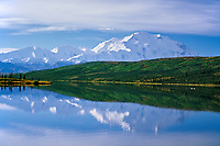 Sunrise on Mt. McKinley as Trumpeter swans swim in Wonder Lake, Denali National Park, Alaska