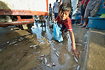 Junior Abuna, 13, picks up small fish that have fallen on the ground as workers unload fish at sunrise from boats in the harbor of Estancia, a village in the Philippines that was hit hard by Typhoon Haiyan in November 2013. The storm was known locally as Yolanda. The boy takes the fish home for his mother to cook for the family. The ACT Alliance has been active assisting residents of this town to recover from the typhoon.