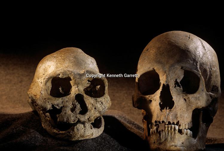 Homo erectus skull, toothless, and modern human skull, Dmanisi, 1.8 million year old hominins, Republic of Georgia.