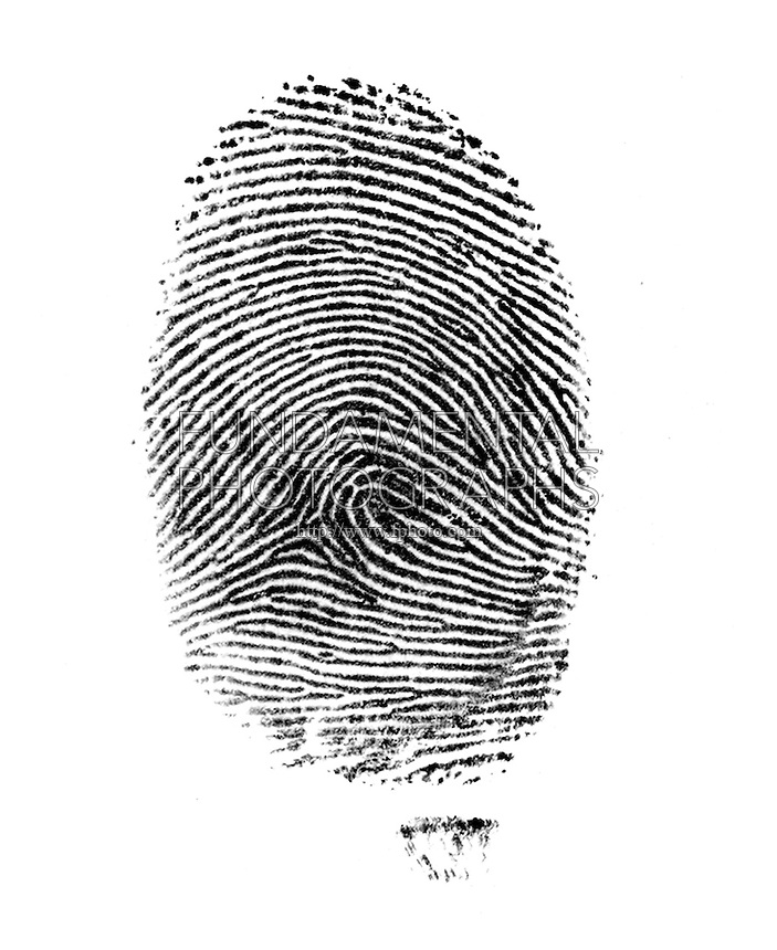 FINGERPRINT<br /> Right Loop<br /> A fingerprint is an imprint made by the pattern of ridges on the pad of a human finger. No two humans have ever been found to have identical fingerprints. The five most commonly used are: whorl, right loop, left loop, arch and tented arch.