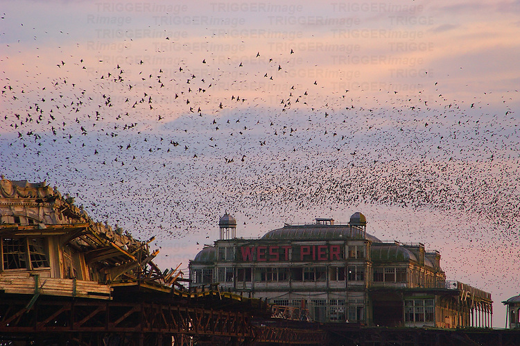 The West Pier at Brighton with a flock of birds
