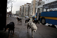 Bulgaria: Stray Dogs in Sofia - 2012