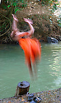 Novice Monk Diving-Klong Thom Hot Springs, Thailand