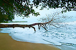 Puerto Vargas Beach in Cahuita National Park, where the land meets the sea, on Costa Rica's southern Caribbean coast.