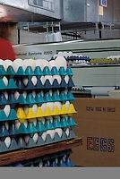 egg processing plant carton packing assembly line