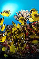 Underwater photos around Maui water.<br /> Fotos bajo el agua de las costas de Maui,Hawaii.