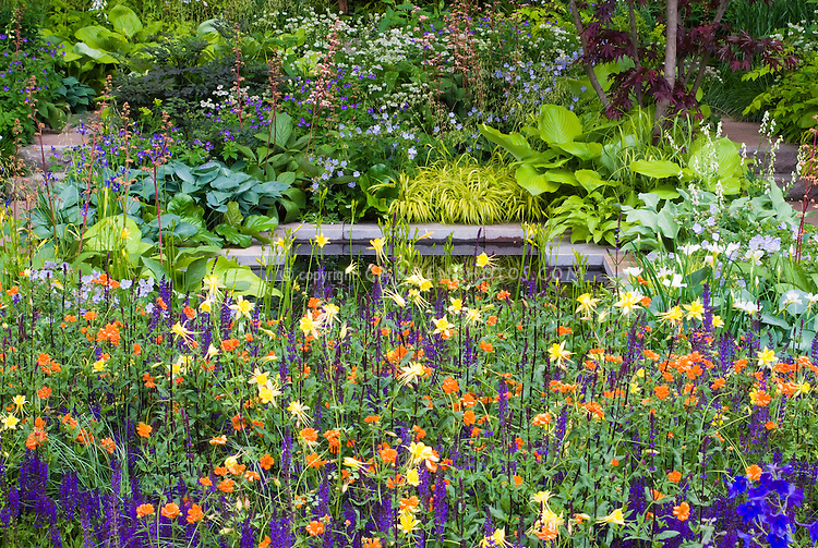 Lush flower garden with strong colors orange puple for Ornamental grass with yellow flowers