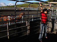 """Nahe Tachera, 9, whose great-grandfather, grandfather and father are or were all cowboys, uses the horse trailer as her jungle-gym on Kahua Ranch in North Kohala, Hawaii.  Nahe and her sister, Kamehana, 11, live with their father, Wayne Tachera, in """"cowboy housing"""" on the ranch.  The girls learned to ride horses as toddlers and have grown up with the ranch as their playground.  """"My dad's work is great.  While he works, we can play around the ranch and he doesn't have to worry about us"""", says Nahe.  """"We're definitely cowgirls"""", adds Kamehana who regularly competes in rodeos and who can often be found cutting photos of cowboys out of magazines and pasting them in her scrapbook."""