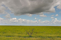 Landscape outside Halls Creek is empty and barren except for a lone bush, green grasses and clouds in the sky.