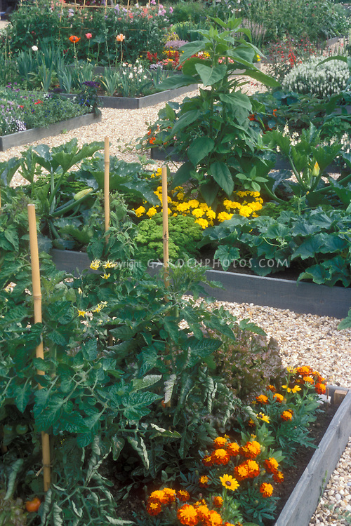 Raised bed vegetable garden using galvanized steel, with tomatoes on pole stakes, marigolds, squash, zucchini, flowers mixed in