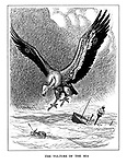 The Vulture of the Sea