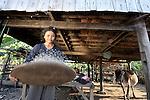 Kea Sineurn winnows rice below her house in the Cambodian village of Char.