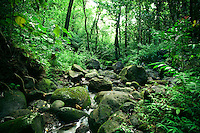 Trees and rocks surround a flowing stream near the Manoa Valley Trail in the back of Manoa Valley, O'ahu.