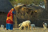 Mandava Rajasthan India