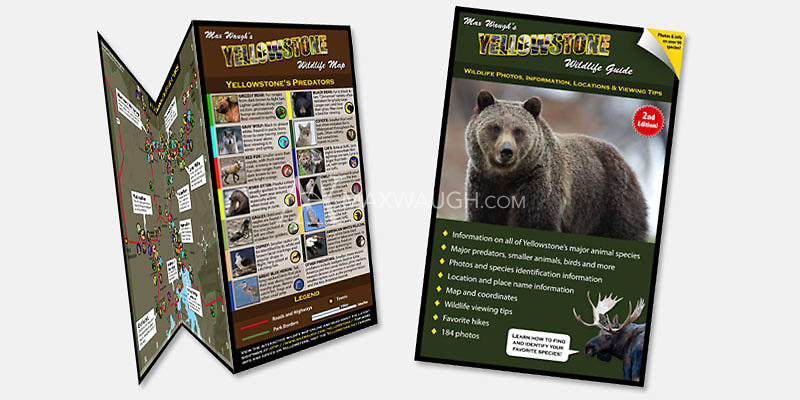 $21.99<br /> <br /> Purchase the Yellowstone Wildlife Map and Guide as a combo and save!
