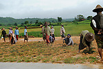 Burmese workers forced to plant trees along the Naypyidaw highway.