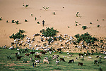 A wave of sand laps a shore of grass where dune meets pasture in Niger. Inevitably, goats will devour the remaining bushes; the dunes will advance. And more pastoralists will give up their life, seeking refuge in the cities. <br />
