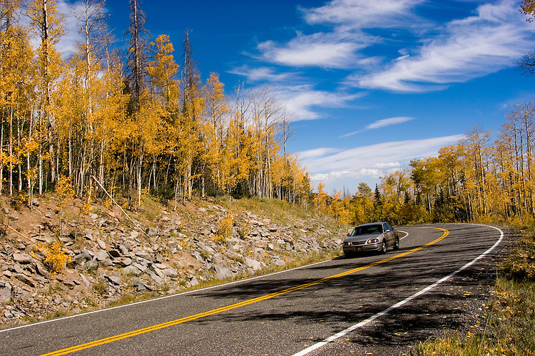 Car driving on road, Golden Aspen leaves, aspen trees in fall, white bark, autumn, fall leaves, fall color, Markagunt Plateau, Cedar Mountain, Hwy 132, Mile Marker 24, Dixie National Forest, Utah, UT, car, tourists, tourism, sightseeing, Image ut326-18897, Photo copyright: Lee Foster, www.fostertravel.com, lee@fostertravel.com, 510-549-2202
