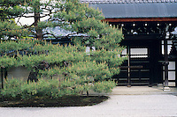 Pine trees are a major element in the Japanese garden and they are shaped into many different forms.