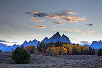 Golden Aspens,sagebrush hills and the Grand Tetons in Grand Teton National Park.
