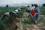 Millet farmers, The Sahel, Niger, Africa, 1986, NIGER-10010NF2