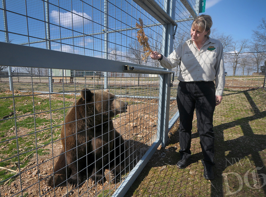 NWA Democrat-Gazette/BEN GOFF @NWABENGOFF<br /> Tanya Smith, founder and president of Turpentine Creek Wildlife Refuge, offers an enrichment to Bam Bam, a grizzly bear, on Thursday March 3, 2016 at the refuge in Eureka Springs.