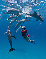 RW4852-Dv. Atlantic Spotted Dolphins (Stenella frontalis), resident pods of wild dolphins in the Bahamas off Bimini and Grand Bahama Island offer eco-tourists from around the world a superb encounter swimming with the playful marine mammals. Bahamas, Atlantic Ocean. Cropped to vertical from native horizontal format.<br /> Photo Copyright &copy; Brandon Cole. All rights reserved worldwide.  www.brandoncole.com