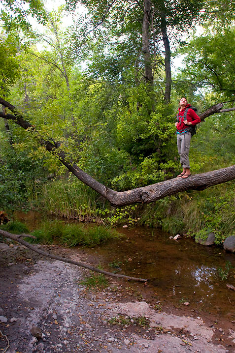 A hiker gets a good look downstream from atop a tree at the source of Fossil Creek, AZ