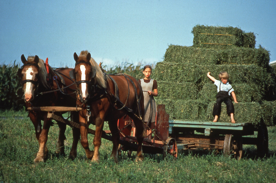 Hay Wagon Amish children hay wagon.jpg