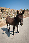 Donkey in the road, Folegandros, Cyclades, Greece