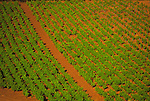 Red soil of Kunde vineyard near Kenwood, California