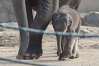 Baby Elephant in Budapest Zoo