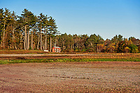 Cranberry bog, Massachusetts, USA
