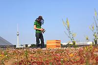 """Philipp Markert, 26 ans  avec ses ruches sur l'église de la résurrection à deux pas d'Alexanderplatz et de l'allé Karl Marx. Cette église a été transformée après la chute du mur en centre de conférence environnemental avec un toit végétalisé et des panneaux solaires pour produire de l'électricité. «Je travaille comme chef cuisinier dans un restaurant et j'ai également suivit une formation d'ingénieur des technologies du bois à l'université...j'ai commencé l'apiculture il y a deux ans après un séminaire sur les abeilles. « Je déteste les pesticides et je fais mes courses en produits bio sur les marchés locaux. C'est difficile d'être un activiste écologiste en Allemagne alors je défends les traditions, la bonne cuisine et les produits biologiques et je boycotte les supermarchés, l'industrie alimentaire qui utilise des pesticides.»/// Philipp Markert, 26 years old, with his hives on the Church of the Resurrection steps from Alexanderplatz and Karl Marx Avenue. Following the fall of the Wall, the church was transformed, into an environmental conference center with a vegetal roof and solar panels to produce electricity. """"I work as the head cook in a restaurant and I also studied to be an engineer in wood technologies at university… I started beekeeping two years ago after a seminar on bees. I hate pesticides and I shop for organic products at the local markets. It's hard to be an ecological activist in Germany so I defend traditions, good cooking and organic products and I boycott supermarkets and the food industry that uses pesticides."""""""