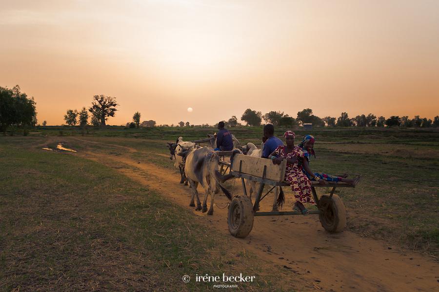 Sunset in Argungu, kebbi State, Nigeria.