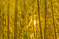 &quot;AUTUMN GOLD&quot;<br /> <br /> Late afternoon autumn sun casts a golden glow upon the water of this Montana pond. ORIGINAL 24 X 36 GALLERY WRAPPED CANVAS SIGNED BY THE ARTIST $2,500. CONTACT FOR AVAILABILITY.
