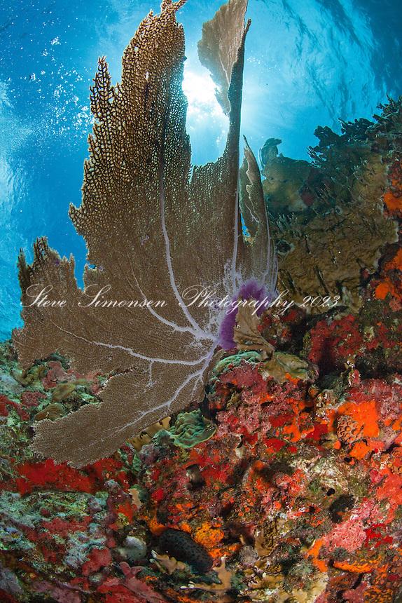 Seafan scenic<br /> Virgin Islands