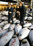 Sellers inspect tuna for the color, firmness, fattiness, flakiness and freshness of the catch.The day begins early at the Tsukiji Fish Market in Tokyo, Japan where a skilled army of licensed middlemen and buyers purchase tuna and a variety of seafood for sale in the market's 1,400 shops. Because of the Japanese passion for freshness, all the fish sold will be consumed by Tokyo residents the following day. (Jim Bryant Photo).....