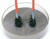 MAGNET ATTRACTS IRON FILINGS MIXED IN SAND<br /> (2 of 3)<br /> A Magnet Draws The Filings Out Of The Sand.