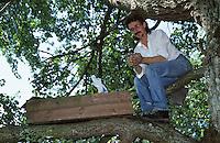Steinkauz, Steinkauzröhre, Nisthilfe im Baum wird von Vogelschützer kontrolliert, Stein-Kauz, Kauz, Käuzchen, Athene noctua, little owl