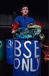 Europe, Britain, Midlands. Mad Cows 'BSE' Crisis. Beasts suspected of BSE. Dyed blue. Animal parts will be incinerated. The burnt remains will be put into landfill sites. 1996.'MEAT' across the World..foto © Nigel Dickinson