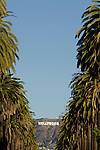 The Hollywood Sign seen through rows of palm trees in Hollywod