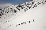 Skiers climbing Tuckerman Ravine in New Hampshire's White Mountains. White Mountain National Forest. April.
