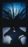 Palm tree & figure