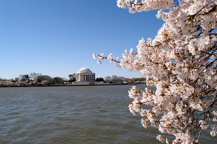Washington, DC: Cherry Blossom Festival.  Cherry blossoms and Jefferson Memorial.  Photo #: washch101 (nef443)..Photo copyright Lee Foster, www.fostertravel.com, 510-549-2202, lee@fostertravel.com