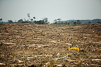 A palm oil plantation in Indonesian Borneo (Kalimantan).<br />
