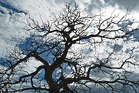 Tree in Winter against the sky in New Mexico