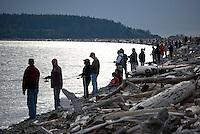Pink salmon fishing in the Puget Sound region of western Washington state is popular from shore and boats when millions of the fish return on odd numbred years.