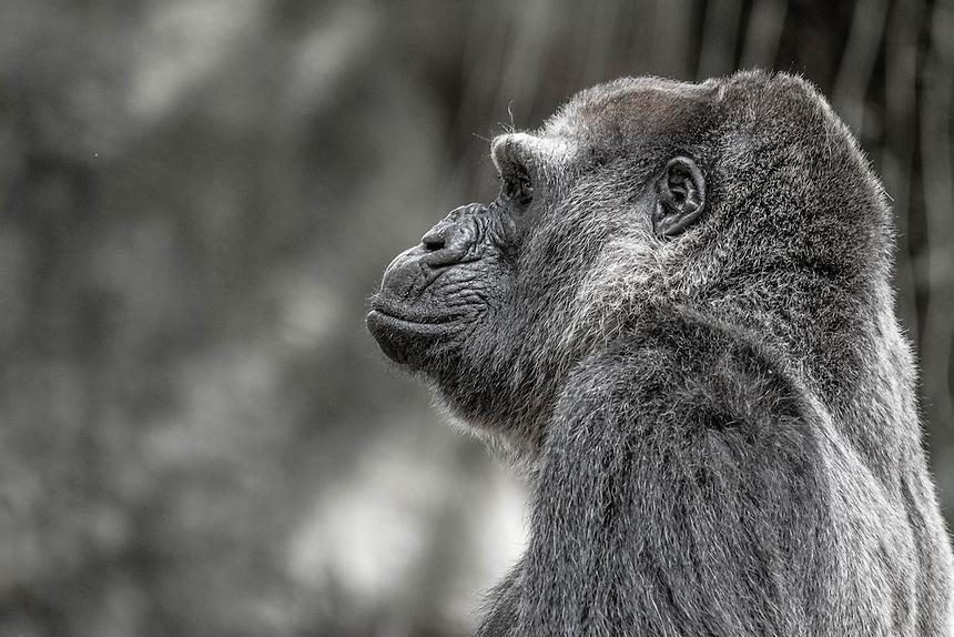 Zoo Atlanta<br /> <br /> Photograph by Brian R. Page, brianpage.photoshelter.com