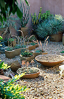 A collection of succulents and cacti in containers by Dina Prinsloo stand on the gravel surface of a walled garden